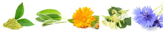 17種類の天然植物エキスと5種類の植物油